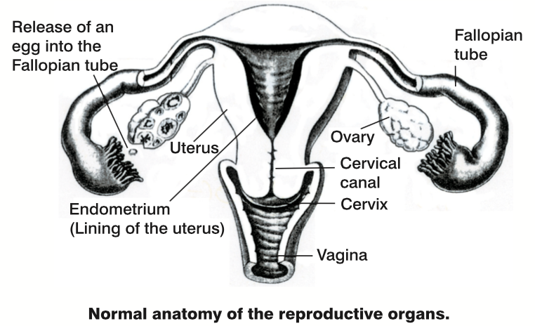 Specialist Gynaecological Investigations